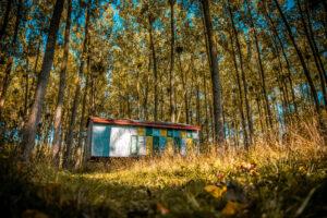 Šuma sa košnicama