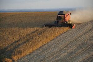 Polje soje